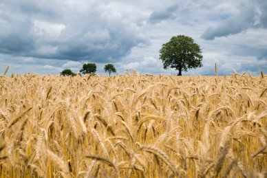 agriculture-2549245_1920