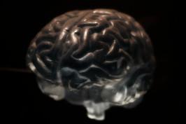 brain-2070412_1920