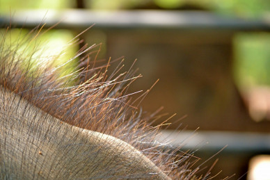 elephant-hair-266125_1280