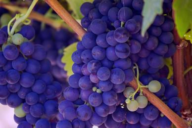 grapes-gc79611fe2_1920