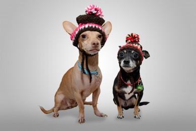 Akcesoria dla psów małych ras