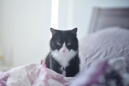 Zobacz, co Twój kot chce Ci powiedzieć?