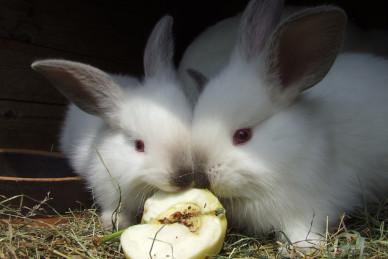 Klatka dla królika: jak ją wybrać?